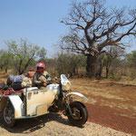 BMW und Baobab