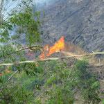 der Dschungel wird einfach abgebrannt - slash and burn for tea and coffee