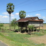 Palm tree, rice fields and houses on stilts lovely