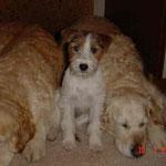 Lucy und die Goldies