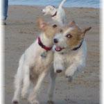 Cheyenne & Lucy ...