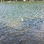Nessy liebt das Wasser