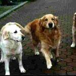 "Avalon, Berry Chuck und Aspatria Stargleam ""Patty"""