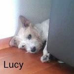 Lucy mit ca. 13 Jahren.