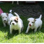 Lola, Lilo und Lexi
