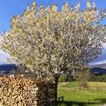 Frühlingswanderung rund um Seitelschlag - Klaffer am Hochficht - Hochfichtblick