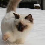 sterlina nella neve