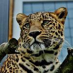Gepard... © Im Augen Blick_Photography