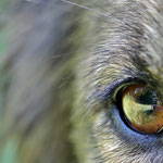Kenya © Im Augen Blick_Photography