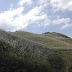 標高千メートルを越える三好市山城町の塩塚高原に吟行してきました。 ・高原の稜線円し花芒 (和良)