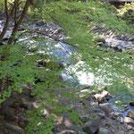 修善寺温泉の真中を流れる修善寺川を土地の人は桂川と呼んでいました。        ・修善寺に桂川あり若楓(和良)
