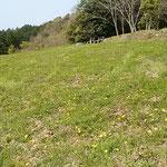 とくしま植物園の丘には蒲公英が一面に咲き競っていました。      ・たんぽぽや平和な日本ありがたし(和良)