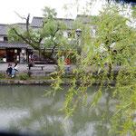 倉敷の美観地区では倉敷川の両岸の川端柳が風に吹かれていました。   ・風止めど揺れの止まらぬ柳かな(和良)