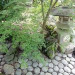 掛川城にある竹の丸の庭園では青楓が風に揺れていました。       ・風通る明治の庭の青楓(和良)