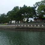 ひょうたん島クルーズでは藩政時代の松並木も見えました。          ・江戸の世の松並木も見船遊(和良)