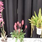 展示された蘭の種類は多く、これも蘭かと思ふ蘭がありました。  ・室に咲きこれも蘭かと思ふ蘭(和良)