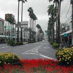 秋雨が降る宇和島駅の朝です。椰子と花壇が印象に残りました。 ・秋湿り花壇の花の映えにけり(和良)