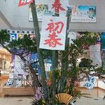 阿波おどり会館の正月飾りはロビーに高々と立っていました。      ・正月の飾りはやばや立つロビー(和良)