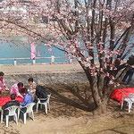 蜂須賀桜と武家屋敷の会の皆さんがお花見会を開いてくれました。    ・花冷えに熱き善哉ありがたく(和良)