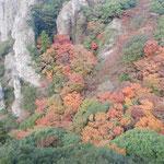 ロープウエイから見た寒霞渓の紅葉は断崖の底まで続いていました。 ・断崖の谷底までも冬紅葉(和良)