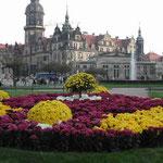 ドレスデンではツヴィンガー宮殿でラファエロの傑作と菊の花壇を見ました。 ・システィーナのマドンナも見て菊も見て (和良)