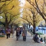 神宮外苑の絵画館前の銀杏並木です。銀杏祭が開かれていました。                        ・銀杏散る神宮外苑黄に染めて(和良)
