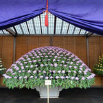 新宿御苑の大作り花壇に今年は初めて見る色の菊が展示されていました。 ・初めての色と菊師の菊語る(和良)