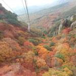 ロープウエイから見た寒霞渓の紅葉は野山を埋め尽くしていました。 ・パノラマの野山の錦果てしなく(和良)