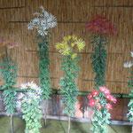 肥後菊花壇です。肥後菊は肥後地方で栽培が始められた古典菊です。   ・肥後菊の花火のやうな咲きっぷり(和良)