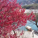 吉野川ハイウエイオアシスにある「美濃田の渕」観光船の乗場です。      ・麗かや観光船に人の列(和良)