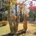 国会議事堂の庭には県の木が植えられ、蘇鉄には雪囲がされていました。                    ・大袈裟に見ゆる蘇鉄の雪囲(和良)