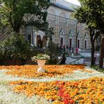 モスクワ市郊外のセルギエフポサードで見た教会の花壇です。                      ・菊の花思ふ黄金の花壇かな(和良)