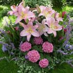 淡路の奇跡の星の植物館でハプスブルグ家の庭の展示を見て来ました。  ・ハプスブルグ家てふ庭の濃紫陽花(和良)