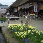 会津の大内宿です。昔の宿場町のたたずまいが今も残っていました。  ・街道に昼の宿あり黄水仙(和良)