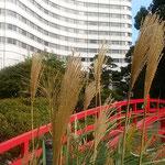 千代田区のホテルには日本庭園があり芒の穂が風にそよいでいました。  ・千代田区のホテルの庭の花芒(和良)