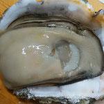 大きな旬の岩牡蠣をいただきました。二人がかりで料理しました。    ・岩牡蠣の圧倒的な大きさよ(和良)
