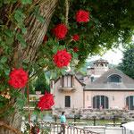 河口湖湖畔のオルゴールの森は薔薇が咲き競っていました。       ・欧州にゐる気分かな薔薇咲いて(和良)