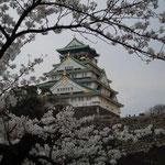 大阪城では広い城内のあちらでもこちらでも桜が満開でした。  ・天守閣見上げ桜も見上げゐる(和良)