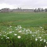 岡山県の蒜山高原の朝です。マーガレットが咲く道を散歩しました。 ・牧場に群れ咲くマーガレットかな (和良)