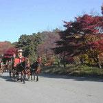 皇居東御苑で見た儀典馬車の演習です。どの馬も汗をかいていました。  ・儀典馬車朝の演習息真白 (和良)