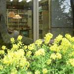 菜の花越しに見えた司馬遼太郎さんの書斎です。生前のままにされていました。  ・菜の花や司馬遼太郎亡き書斎(和良)