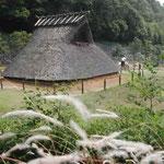 徳島市の阿波史跡公園に吟行しました。ほととぎすがよく鳴きました。 ・縄文も弥生もけふもほととぎす (和良)