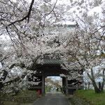 阿波市の熊谷寺です。山門をはじめ寺領を覆い尽くすように桜が咲いていました。     ・寺領みな覆ひ尽くして桜咲く(和良)