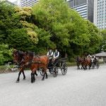 皇居東御苑では鍛錬から帰ったばかりの馬車に出合いました。      ・鍛錬の御苑の馬車に風涼し(和良)