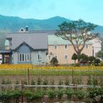 富良野では畑に向日葵を咲かす民家がありました。            ・向日葵の畑民家の庭先に(和良)