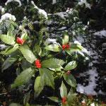 徳島にも雪が降りました。今年は寒い冬になりそうです。  ・雪置ける千両の赤ことのほか (和良)