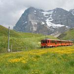 アイガー北壁と登山鉄道を眺めながらのスイスならではのハイキングでした。                   ・高山の短き夏を競ひ咲く(和良)