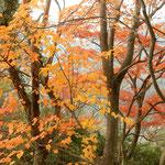 寒霞渓のロープウエイ山頂駅から展望台への道の紅葉も綺麗でした。・山頂駅降りたるそこに笹子鳴く(和良)