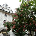 チェスキークルムロフではマロニエが赤い花をつけていました。     マロニエの真っ赤な花と白い壁(和良)