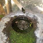 板野町の地蔵寺では水琴窟が澄んだ音を響かせていました。  ・水澄めり水琴窟の音も澄み(和良)